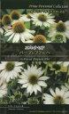 宿根草・多年草・二年草・種・種子の井手商会。一度蒔くだけで毎年花が楽しめる!!【人気商品】(宿根草) エキナセアパープレアアルバ[二年草 種子 多年草 宿根草 種]10P04Aug13
