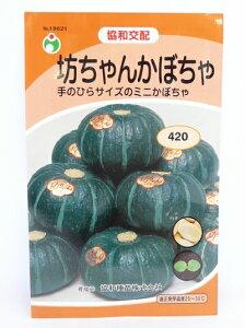 種・種子・家庭菜園・かぼちゃ・南瓜の井手商会。(協和交配)手のひらサイズのミニかぼちゃ。...