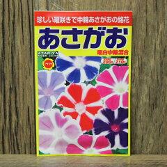 あさがお・ガーデニング・種・種子の井手商会。珍しい曜咲きで中輪あさがおの銘花あさがお 曜...