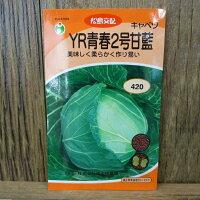 キャベツYR青春2号甘藍(種)[キャベツ、種子、種、家庭菜園]