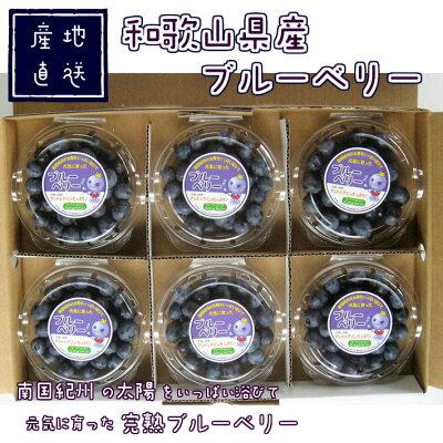 ブルーベリー完熟生果80g×6パック送料無料国産和歌山県産フレッシュブルーベリー