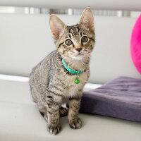 【猫】【首輪】iCatアイキャットキティカラーカラフルピンドット。爽やかなカラーです