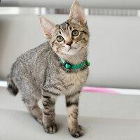 【猫】【首輪】iCatアイキャットキティカラーカラフルピンドット。鮮やかなカラーで目立ちます!
