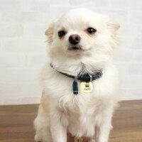 【迷子札】【犬】【猫】iDog&iCatオリジナルメタルネームタグ迷子札クラウン。チワワ4kgのコマメはゴールドM使用