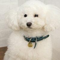 【迷子札】【犬】【猫】iDog&iCatオリジナルメタルネームタグ迷子札白プードル。トイプー3.0kgのコユキはゴールドS使用