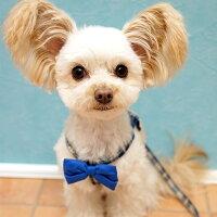 【犬】【首輪】【ハーネス】MIX1.8kgのCOCOくんはネイビーのSを着用