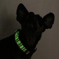 【犬】【首輪】暗闇でぼんやり光る蓄光プリント入り
