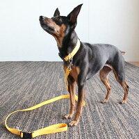 【犬】【首輪】ミニピン3.5kgのバジルちゃんはイエローのMを着用