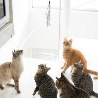 【猫】【おもちゃ】ユラユラキラキラのグリッターテープにニャンコたち興味津々