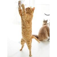 【猫】【おもちゃ】カシャカシャ音に夢中です