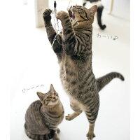 【猫】【おもちゃ】お兄ちゃんが遊び終わったらかくたろうくん(2.4kg)とさんちゃん(2.1kg)の番