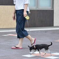 【犬リード】iDog3MFREEWALK【伸縮リード】クラッシュスター【あす楽対応翌日配送】【リールリード軽量】【犬のリード犬用リード】【超小型犬子犬小型犬中型犬】【idog】