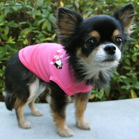 チワワ1.9kgのきなこちゃんはピンクXSを着用