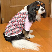 キャバリア7.5kgのルージュちゃんはピンクのXLを着用