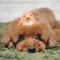 小型犬にぴったりなサイズのおもちゃです