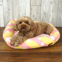 トイプー2.4kgのアイカはピンクのベッドがよく似合います
