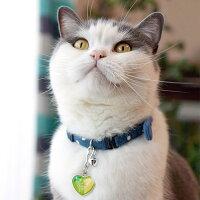 【迷子札】【犬】【猫】ブリショー5.2kgのゆきちくんは青りんごを使用