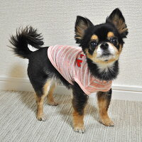 チワワ1.9kgのきなこちゃんはピンクのXSを着用