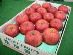 お買い得福島産フジりんご