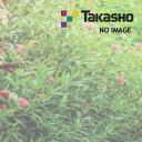 家づくりと工具のお店 家ファン!で買える「タカショー ポーチスカイルーフ スピードナット」の画像です。価格は37円になります。