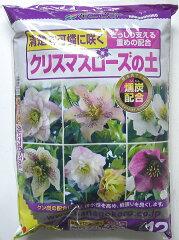 冬の人気植物 クリスマスローズうつむいて咲く控えめなお花清楚で可憐にクリスマスローズの土1...