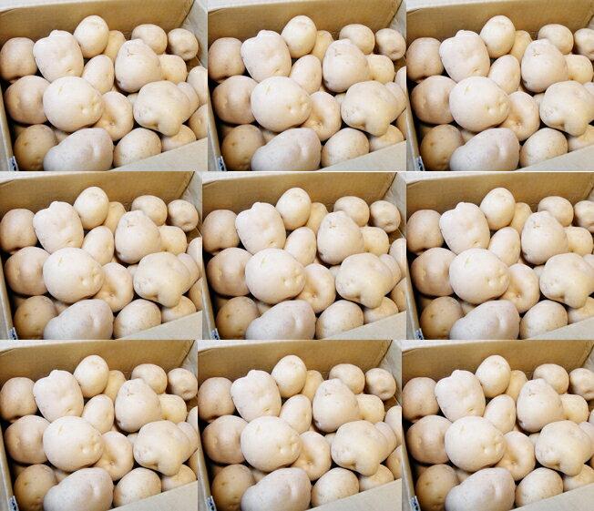 8月より発送!【【予約販売】【数量限定】【料亭ご用達】幻のじゃがいも!白いも(白土)白土馬鈴薯10KG 一般店頭では販売していないよ!!