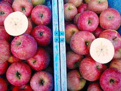 フルーツ・果物, りんご 12 5.1kg 210