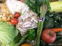 5月より12月まで発送!全品長野産です!安心!新鮮!おまかせ野菜セット10品−13品(宮内庁御用達松代山芋入り)