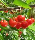 【家庭用】【予約販売】【数量限定】長野産さくらんぼ 約200g