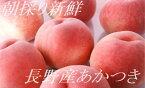 8月上旬から発送!糖度12-14程度【数量限定】完熟桃 あかつき 北信州(長野産)の桃大玉 3個〜4個 果物箱入り(内容量約1k)