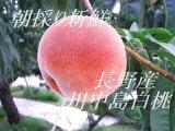 【今が旬】糖度14以上の北信州の桃!桃の王様の白鳳