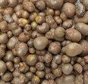 10月半ばごろより発送予定!山芋の種芋です!長野産 むかご(ムカゴ) 約300g