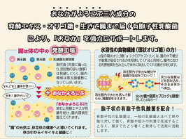 体内酵素・腸内細菌の活性物質