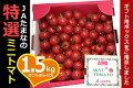 ミニトマトのギフトボックス(九州熊本・JAたまな特選品)1.5kg箱入り★玉名自慢のミニトマト