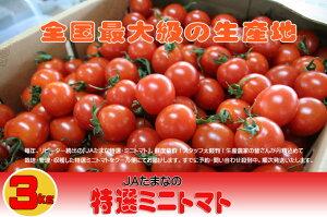 全国最大級の生産地☆熊本県JAたまな『厳選されたミニトマト3kg箱』★【贈答に最適】