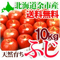 送料無料!りんご発祥の地 北海道余市産りんご「ふじ」10kg有機質の肥料で育った美味しいリンゴ...