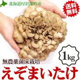 舞茸高級えぞまいたけ1kg(2株)北海道産マイタケ贈り物内祝いお返しギフト送料無料バーベキューBBQビタミンD
