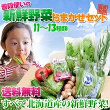 野菜11〜13種セット