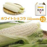 生でガブっと!白いとうもろこしホワイトショコラLLサイズ10本セット北海道中富良野産送料無料雪のように白い