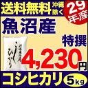【新米】魚沼産コシヒカリ 特選 5kg 29年産 新潟産 米 【送料無料】(沖縄を除く)