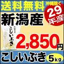 【新米】こしいぶき 5kg 29年産 新潟産 米 【送料無料】(沖縄を除く)