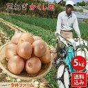 【予約商品】淡路島新たまねぎかくし玉【訳あり】5kg #かくし玉訳あり5K#たまねぎ
