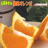 見切り価格 超濃厚!山田の清見オレンジL 10個【送料無料】