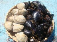 ★送料込み★大アサリ&ムール貝セット価格でご提供致します!!【内容量】ムール貝2kg・大アサリ小1kg