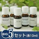 『BIG-5セット』※人気5銘柄のスペシャルセットです!!(真正ラベンダー・オレンジスゥイート・ティートリー・グレープフルーツ・ペパーミント/各10ml)(日本アロマ環境協会/表示基準適合認定精油/インセント)(エッセンシャルオイル 精油 アロマオイル)