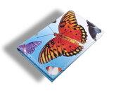 ACME(アクメ)「BUTTERFLIES」レザーカードケース