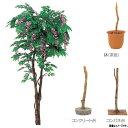 グローベン 人工植物 樹木・屋内用 フジ A70NT175 H1500mm