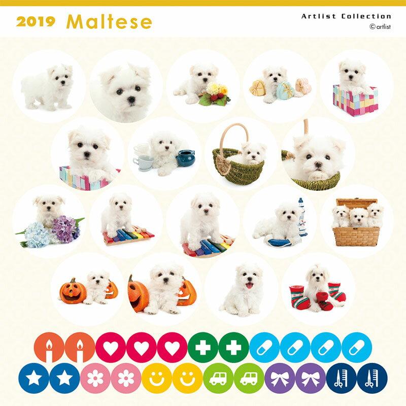【あす楽】THE DOG 2019年 ミニカレンダー マルチーズ