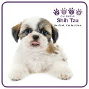 【メール便可】THE DOG 2020年 ミニカレンダー シーズー[犬/ドッグ/ペット/calendar/令和/壁掛け]