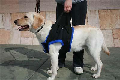 前肢補助歩行ハーネス(サイズ:L) 犬用ハーネス 犬ハーネス 歩行補助ハーネス ハーネス 犬 犬用 老犬 高齢犬 介護犬 歩行補助 補助 散歩 介護 前足 ペット用品 ペットグッズ 介護用品 介護グッズ 犬用品